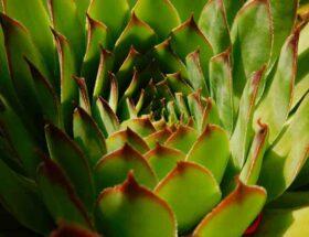 Aloe vera contour des yeux avis