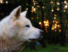 Avis complément alimentaire chien arthrose