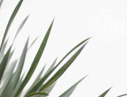 Soin hydratant matifiant aux résines tropicales trattamento viso